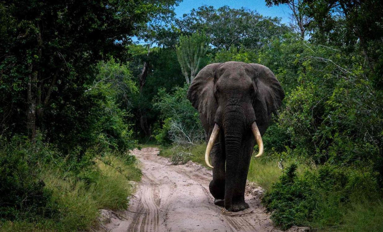 Royal Thonga Safari Lodge for 2 nights from R3 710* pps - self drive