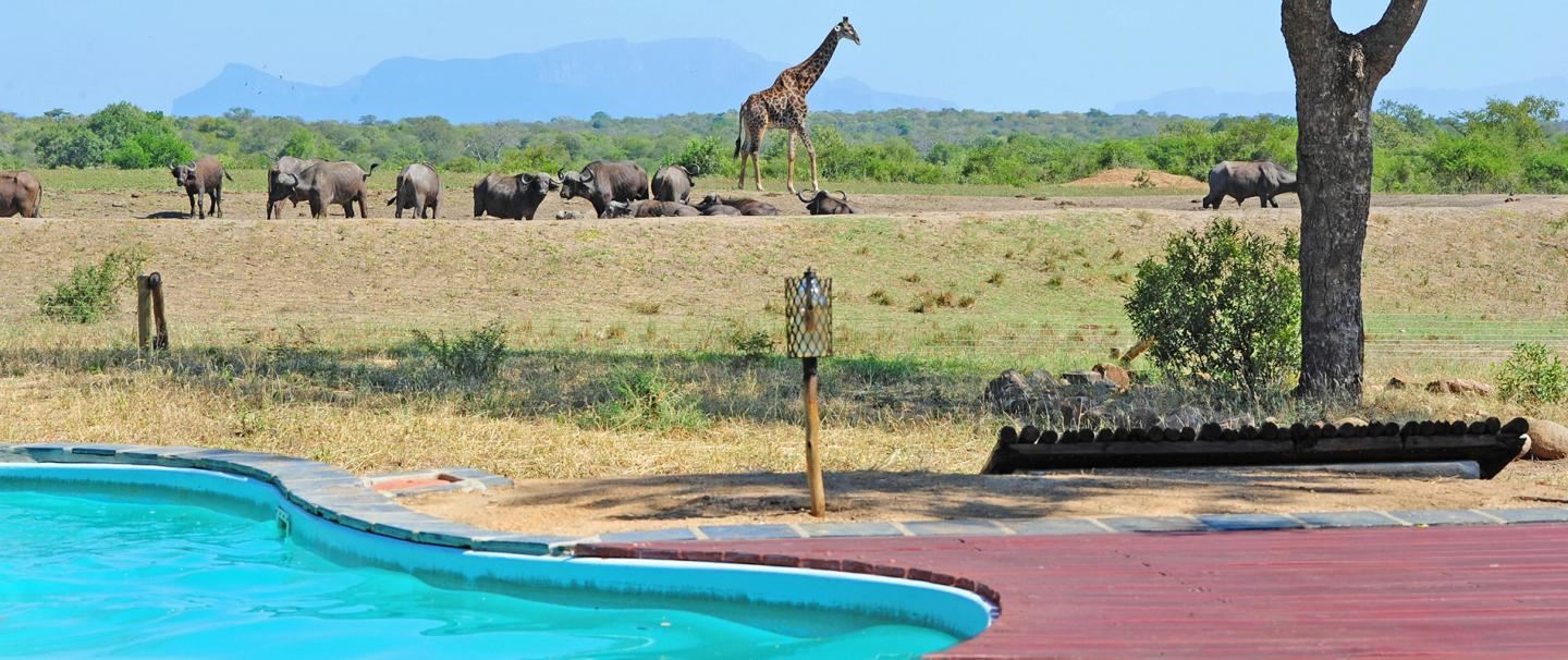 Tangala Safari Camp, Thornybush Game Reserve for 2 nights from R9 530* pps - self drive