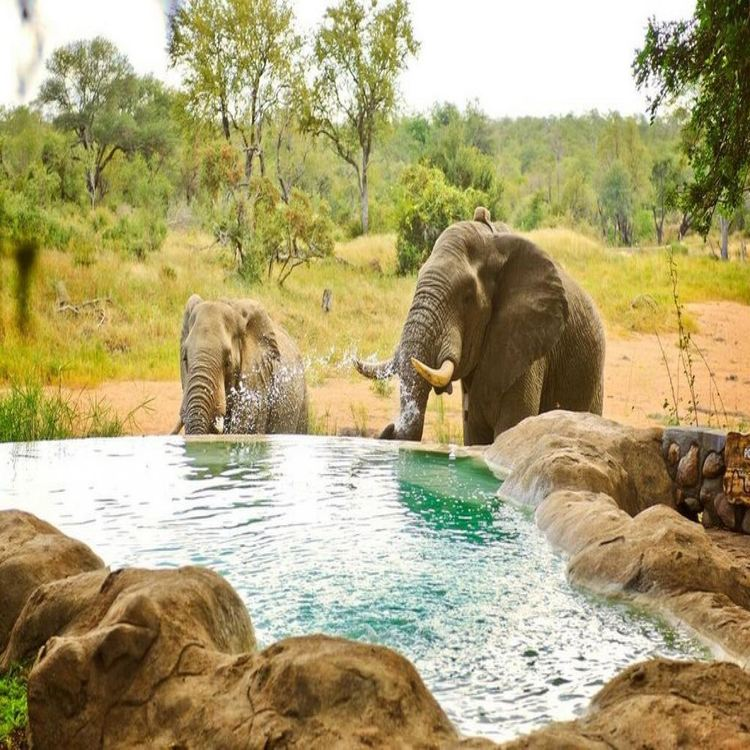 Motswari Private Game Reserve for 2 nights from R5 550* pps - self drive