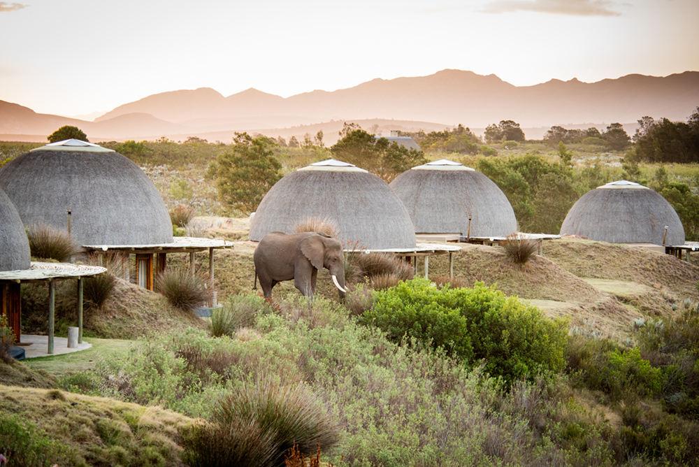 Summer Safari Special - 2 nights Gondwana Game Reserve - Garden Route